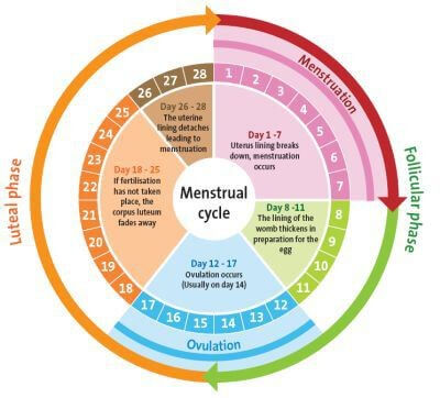 Can You Get Pregnant When Not Ovulating; Understanding Concept